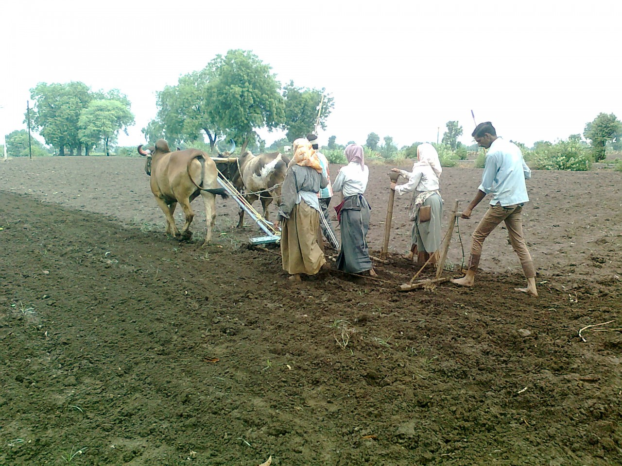 Sowing_in_Chinawal_1